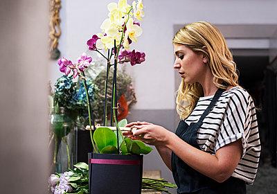 Florist arranging orchids in flower shop - p1166m1182700 by Cavan Images