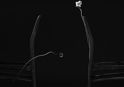Chair and Poppy - p1371m1225730 by virginie perocheau