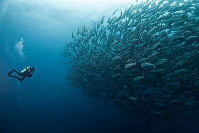 Costa Rica, Cocos Island, female diver opposite to a school of snappers - p300m1017688 by Christian Zappel