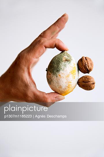 Person hält verschimmelte Zitrone und Walnüsse - p1307m1185223 von Agnès Deschamps