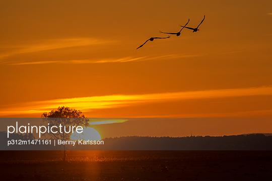 p312m1471161 von Benny Karlsson