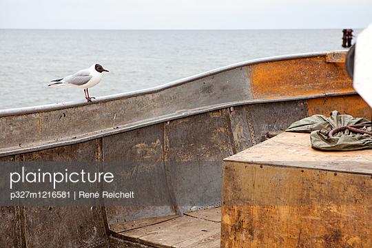 Möwe ruht sich auf der Reling aus - p327m1216581 von René Reichelt