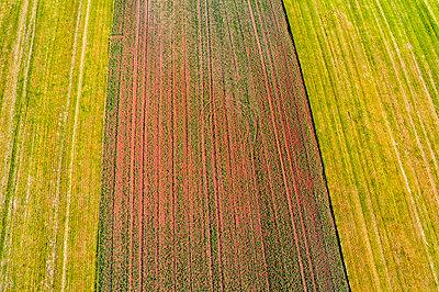 Germany, Baden-Wuerttemberg, Rems-Murr-Kreis, Aerial view of fields - p300m1587629 von Stefan Schurr