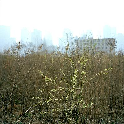 Wohnsiedlung - p949m658156 von Frauke Schumann