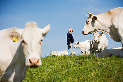 Farmer standing on pasture with grazing cows - p312m695377 by Lina Karna Kippel