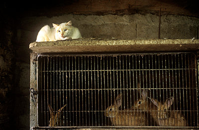Animals on a farm - p6570075 by Loic Trujillo
