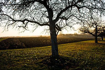 Apfelbäume im Herbst - p1046m1138214 von Moritz Küstner