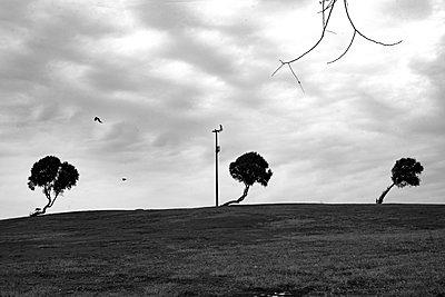 Trees - p1484m2203589 by Céline Nieszawer