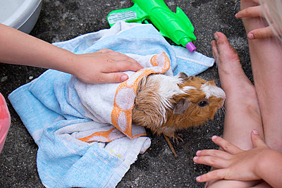 Girls playing with guinea-pig - p522m944553 by Pauline Ruhl Saur