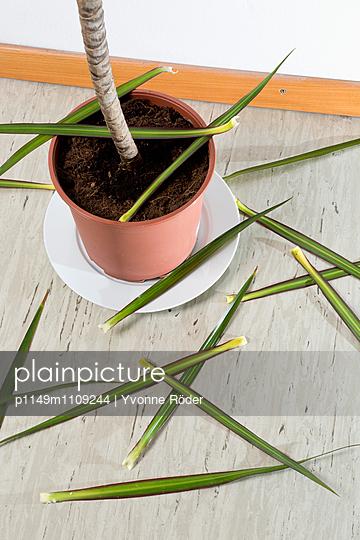 Houseplant losing leaves - p1149m1109244 by Yvonne Röder