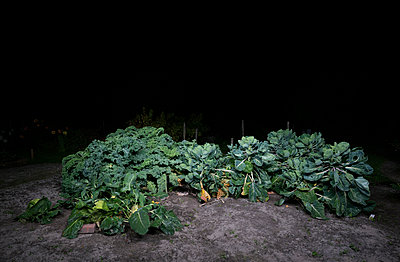 Vegetable patch - p1132m2027947 by Mischa Keijser
