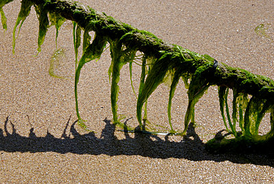Seaweed on a rope - p260m1161248 by Frank Dan Hofacker