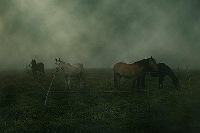 Pferde im Nebel - p647m1113095 von Tine Butter