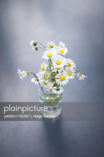 Gänseblümchen - p403m1152397 von Helge Sauber