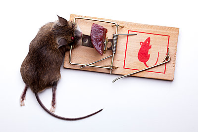 Dead Mouse in trap - p1501m2093284 by Alexander Sommer