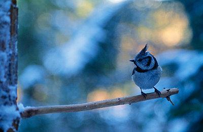 Bird perched on tree branch - p5750306 by Jarl von Scheele