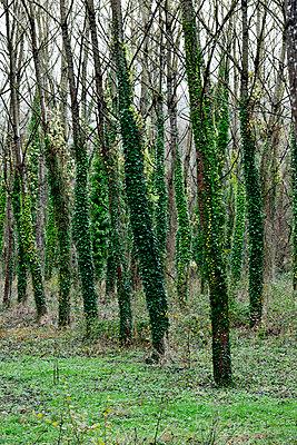 Périgord - p248m966705 by BY