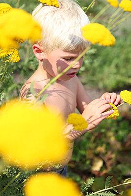 Little boy within flowers - p045m944620 by Jasmin Sander