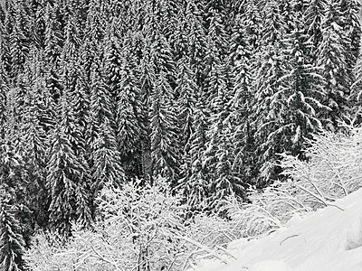 Snow in the mountains - p1048m2016625 by Mark Wagner
