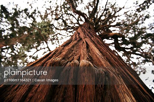 p1166m1164321 von Cavan Images
