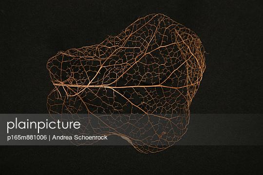 Blatt - p165m881006 von Andrea Schoenrock
