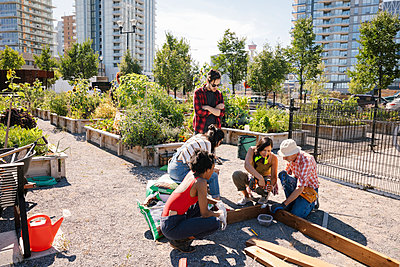 Man guiding young adults building planter box in sunny community garden - p1192m2130233 by Hero Images