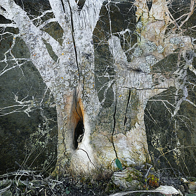 Like Ghosts - p1633m2210026 by Bernd Webler