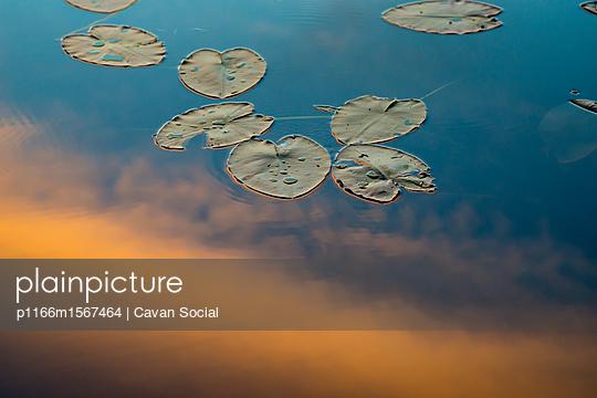 p1166m1567464 von Cavan Social