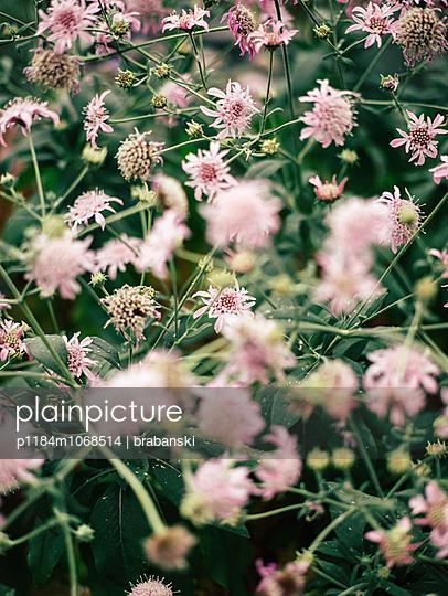 Botanic Garden - p1184m1068514 by brabanski