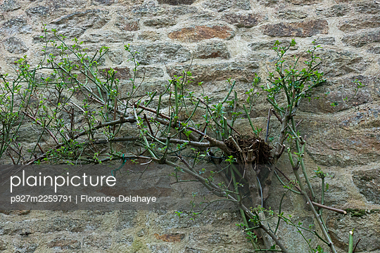Nest in a rose - p927m2259791 by Florence Delahaye