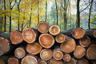 Aufgestapelte gefällte Bäume - p1057m1502851 von Stephen Shepherd