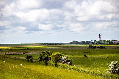 Landwirtschaft auf Pellworm - p754m1590113 von Valea Diller-El Khazrajy