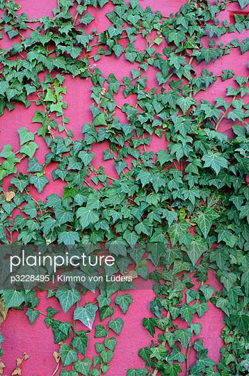 Kletterpflanze - p3228495 von Kimmo von Lüders