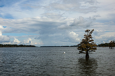 Lake Chicot - p1291m1465554 by Marcus Bastel
