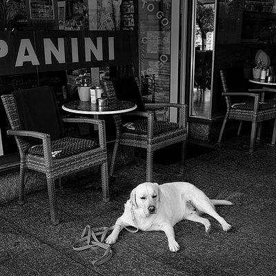 Hund im Café - p1088m1207374 von Martin Benner
