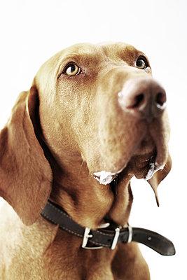Dog collar - p4030584 by Helge Sauber