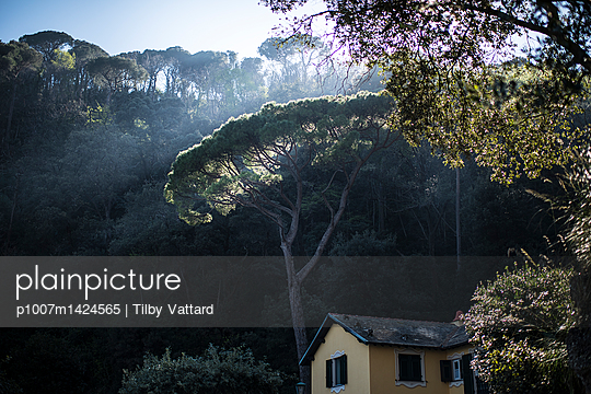 Light in a pine tree - p1007m1424565 by Tilby Vattard