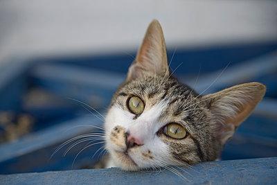 Neugierige Katze - p330m1477285 von Harald Braun