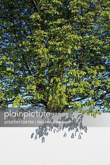 Baum hinter Mauer - p1057m1124154 von Stephen Shepherd