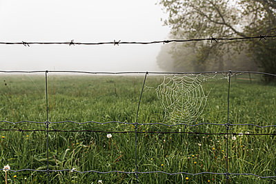 Close up of dew covered spider web on a wire fence in the fog. - p1166m2113073 by Cavan Images