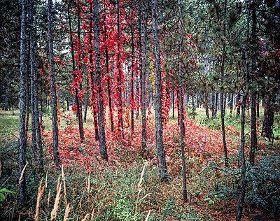 Wald - p1205m1066002 von Klaus Pichler