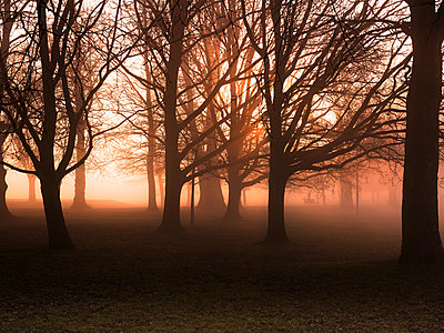 Bare trees in misty park at sunrise - p429m1417609 by David Cleveland