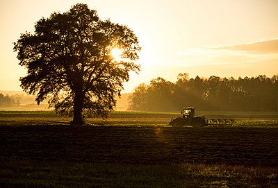 Tractor in the field at sunset - p552m1190842 by Leander Hopf