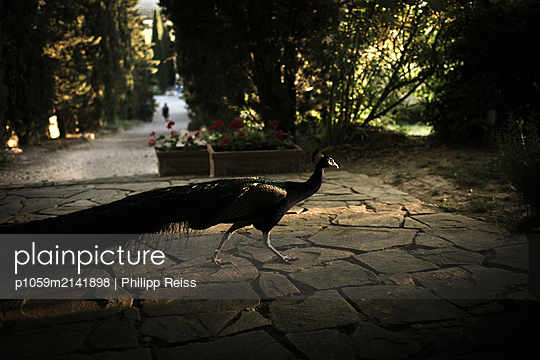 p1059m2141898 by Philipp Reiss