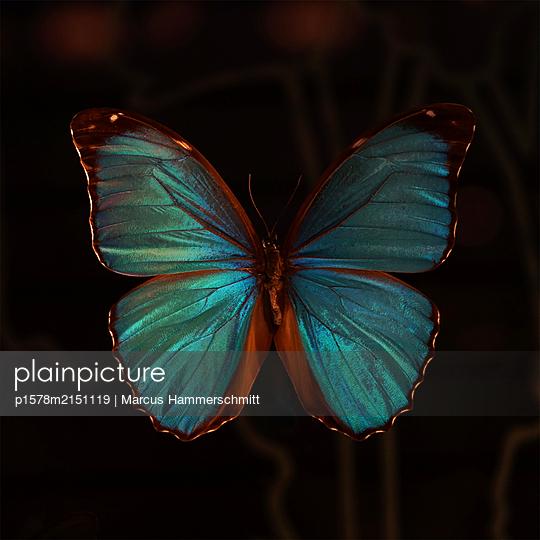 p1578m2151119 by Marcus Hammerschmitt