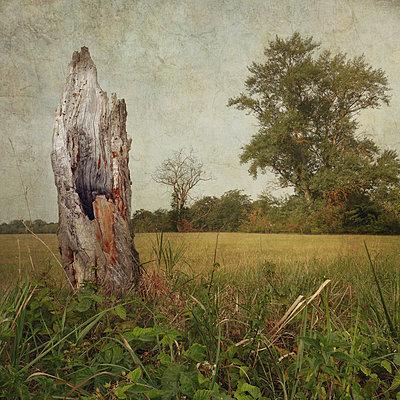 The Old Land - p1633m2209062 by Bernd Webler