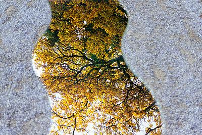 Spiegelung der Natur - p728m1193636 von Peter Nitsch