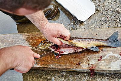 Fisch ausnehmen - p1272m1460811 von Steffen Scheyhing