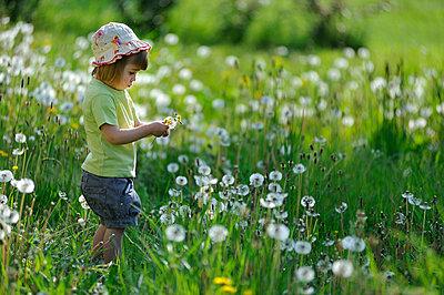 Kind zwischen Pusteblumen - p8290103 von Régis Domergue