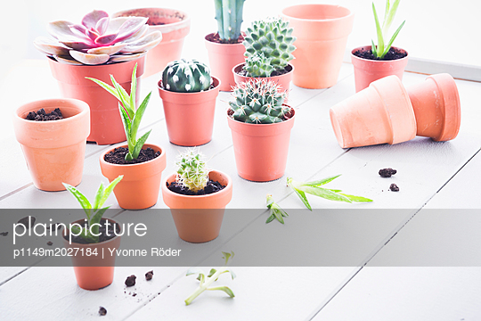 Cati and succulents - p1149m2027184 by Yvonne Röder